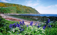Mhor Head, Gardenstown with bluebells