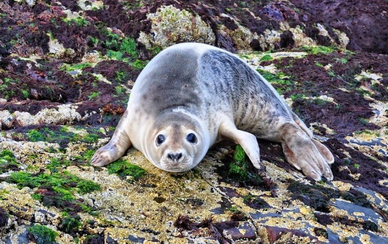 discover-gardenstown-seal