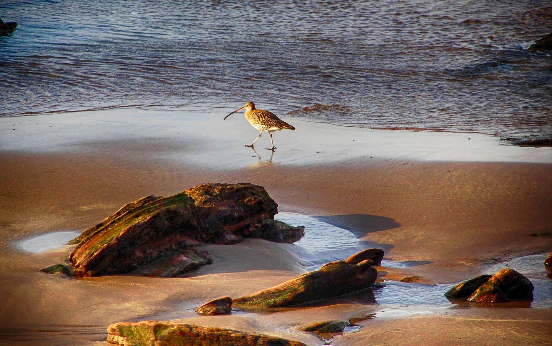 Birdlife - Sue Scarrott