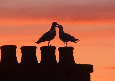 Gulls - Ron Beaty