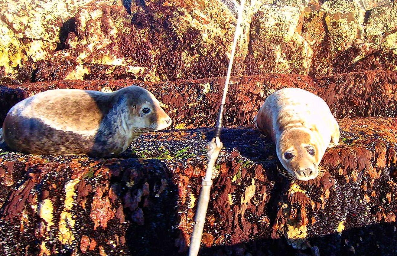 Sue Scarrott - Seals